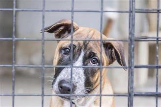 adopt a cyprus rescue dog