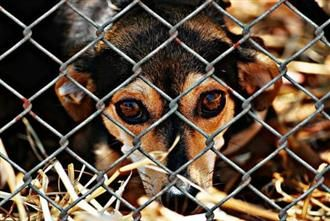 Cyprus Dog Rescue Shelters