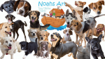 Noah's Ark Dog Shelter Cyprus