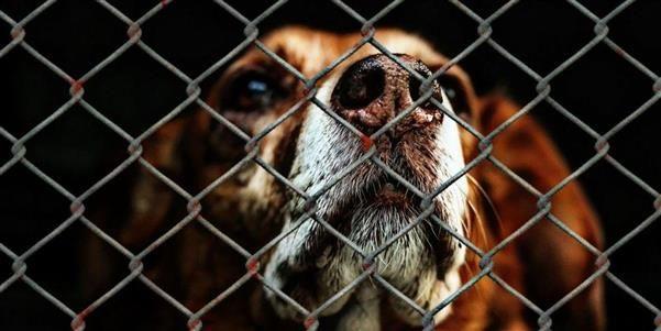 Elenis Dog Shelter Sotira Cyprus