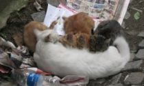 A cat can give birth two to three times per year (Evie Andreou)