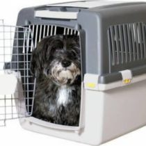 Gulliver Car or Dog Transport Travel Crate