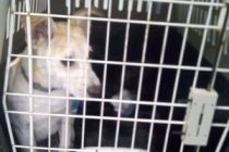 Pet Rescue Flight from Larnaca
