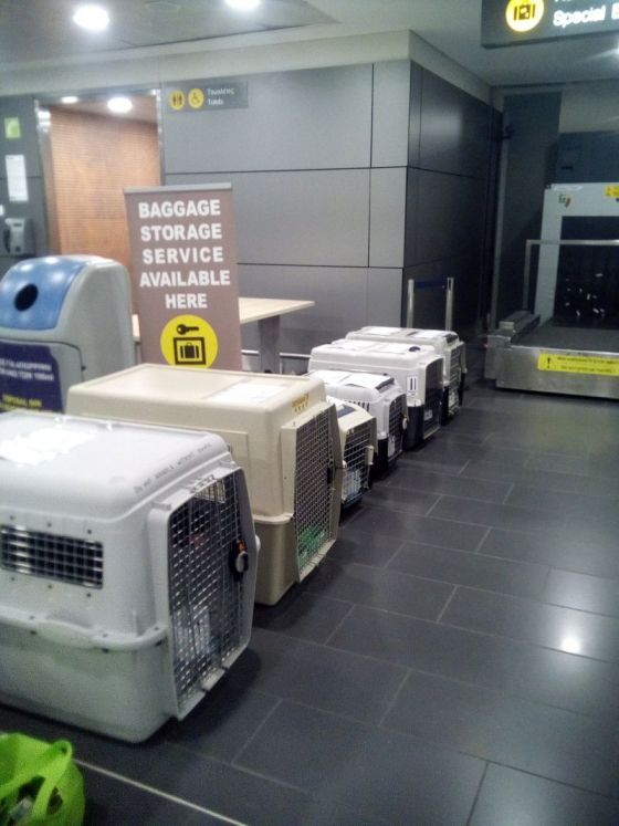 Animal Rescue Check in at Larnaca Airport