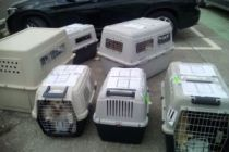 Pet Rescue Flight from Larnaca to Brussels