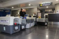 Larnaka Airport Departure