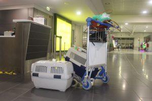 Larnaka Departure Check In