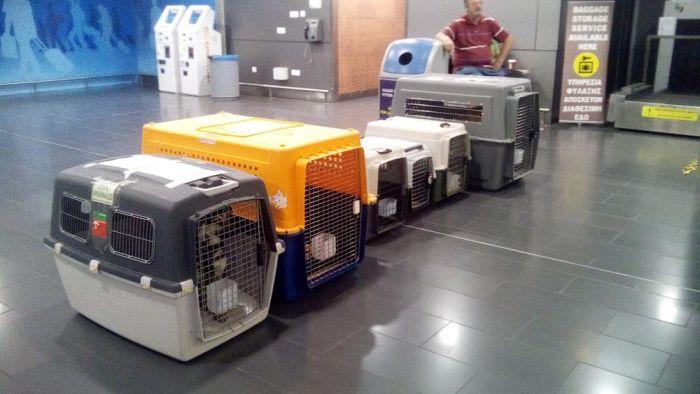 Lost Paws Sotira Dog Pound Rescue Flight to Paris and UK 13.11.2019