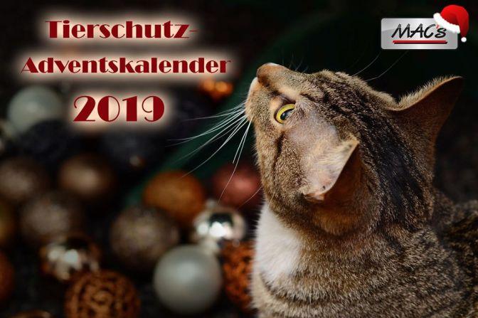 Mac's Tierschutz Advent Kalender