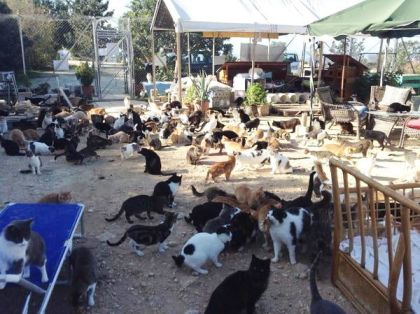 Tala Monastery cat sanctuary is home to 750 animals