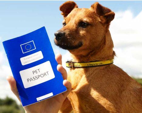 Pet Travel after Brexit
