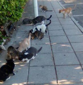 Protaras Cats at Capo Bay