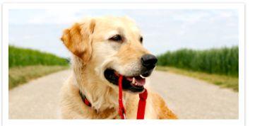 Paralimni Dog Pound Charity Dog Walk