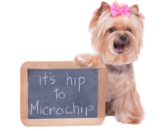 Free Dog Micro Chipping in Cyprus extended until March 2020