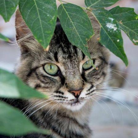 Friends of Larnaca Cats