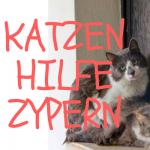 Katzenhilfe Zypern