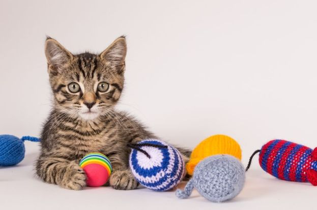 Knitting Kittens Club Battersea