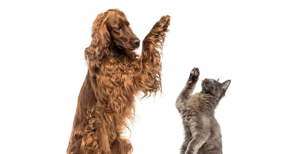 Charity Events for Pet Shelters