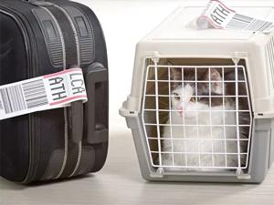 traveling with pets on cyprus airways
